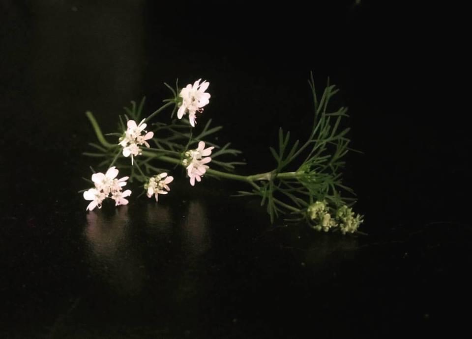 Εδώδιμα άνθη