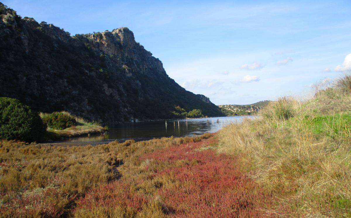 Σαλικόρνια ή Σπαράγγια της (λιμνο)θάλασσας στη Γιάλοβα, γράφει η Γιάννα.