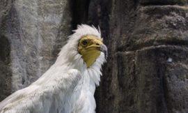 Ξενάγηση στο Μουσείο Φυσικής Ιστορίας Μετεώρων & στο Μουσείο Μανιταριών